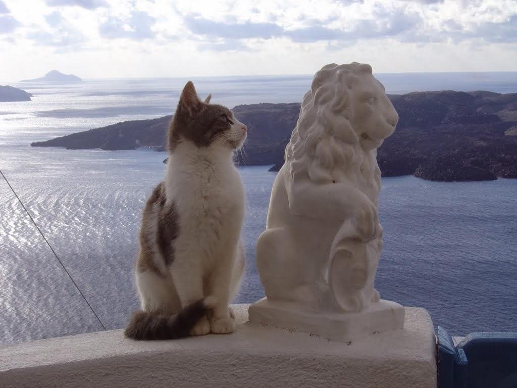 Aegean cat wallpapers HD