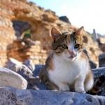 Aegean cat hd photos