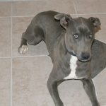 Blue Lacy widescreen