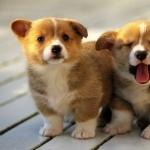 Puppy new photos