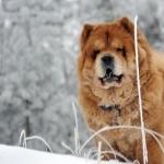 Dogs hd photos