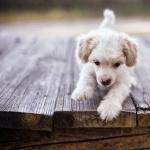 Puppy new wallpaper
