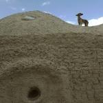 Afghan Hound hd wallpaper