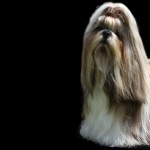 Dogs high quality wallpapers