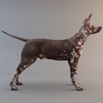 Mexican Hairless Dog new wallpapers