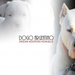 Dogo Argentino high quality wallpapers