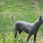 Mexican Hairless Dog photos