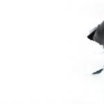 Neapolitan Mastiff high definition photo
