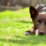 Dogs hd pics
