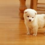 Puppy image