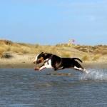 Bull Terrier download