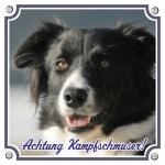Appenzeller Sennenhund free