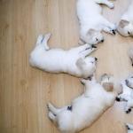Puppy full hd
