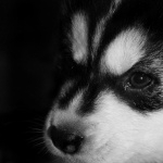 Puppy download wallpaper