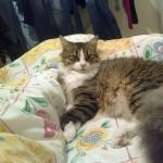 Aegean cat download
