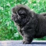 Puppy widescreen