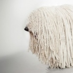 Komondor hd wallpaper
