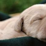 Puppy hd pics