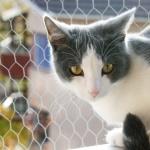 Aegean cat free download