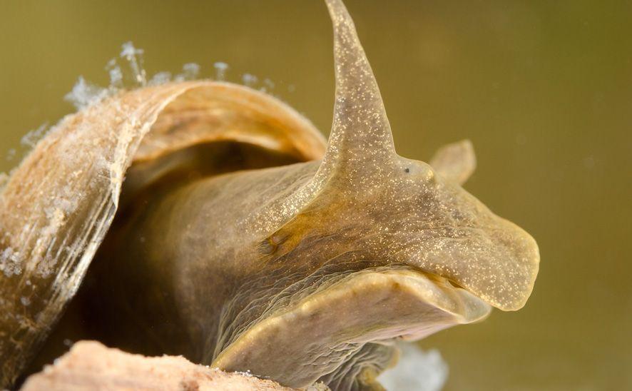 Aquatic Snail wallpapers HD