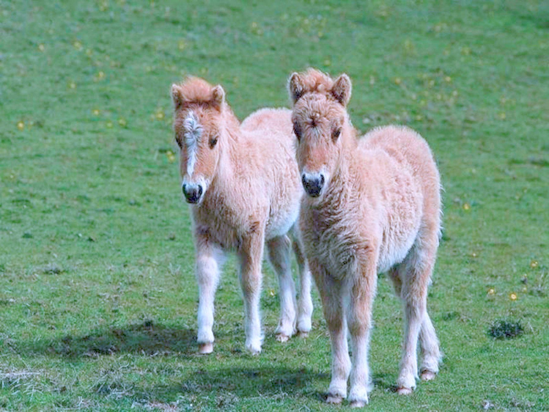 Donkey wallpapers HD