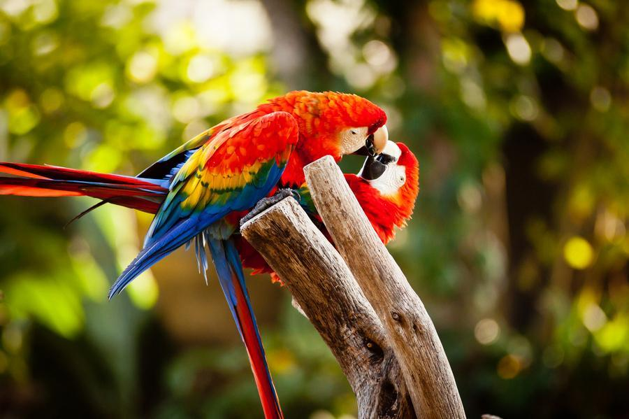 Lovebird wallpapers HD