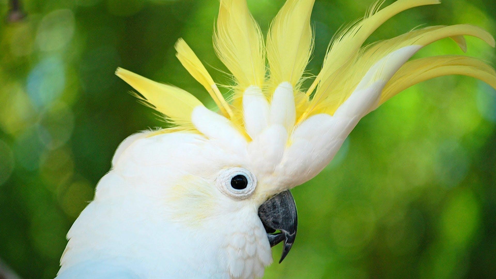 Parrot Ring Database