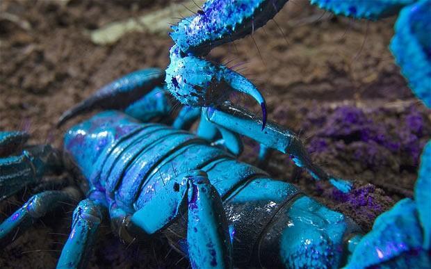 Emperor Scorpion Free Download