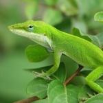 Lizard photos
