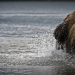 Bear free wallpapers