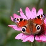 Butterflies pic