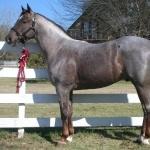 Quarter Horse photo