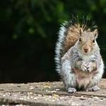 Squirrel hd desktop