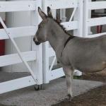 Donkey images