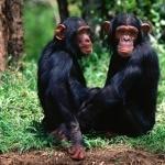 Monkey free download