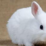 Rabbit 1080p
