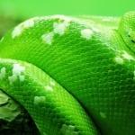 Snake images