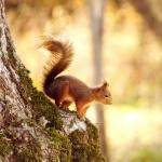 Squirrel new wallpaper