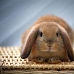 Bunnies full hd