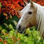 Horse desktop