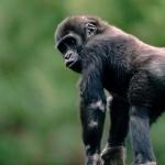 Monkey cute