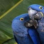 Parrot desktop