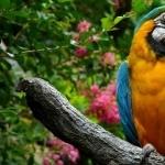 Macaw 1080p