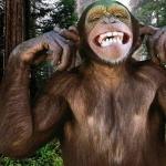 Monkey hd pics
