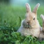 Rabbit high definition photo