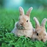 Bunnies widescreen