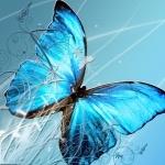 Butterflies hd pics