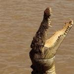 Crocodile 1080p