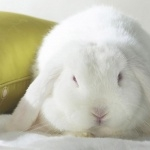 Rabbit photos