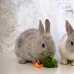 Bunnies hd desktop